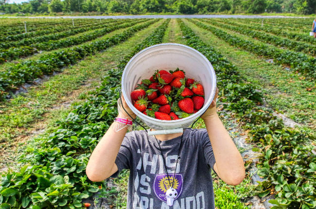 a man holding a bucket of strawberries