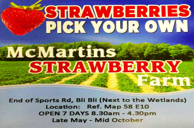 the front sign for McMartins Strawberry Farm